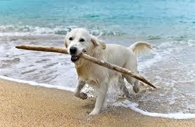 4 spiagge per cani in puglia